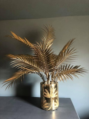 Champagne Palm Image